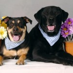 Customers' dogs - Toby and Shadow
